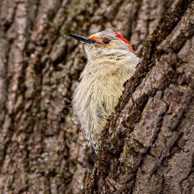 Birdie In The Bark