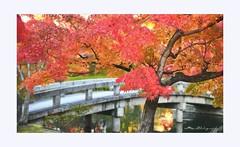 Garden of Eikan-dō Zenrin-ji Temple