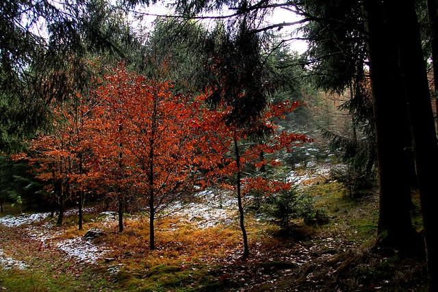 Am Waldweg