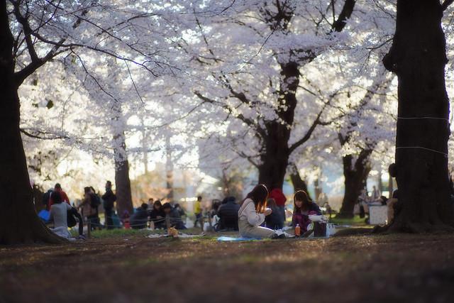 Misc Sakura Snap