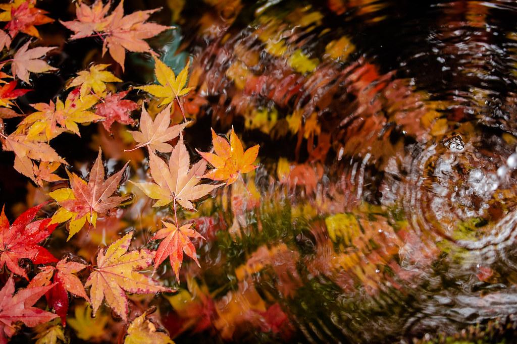浮き沈む秋色