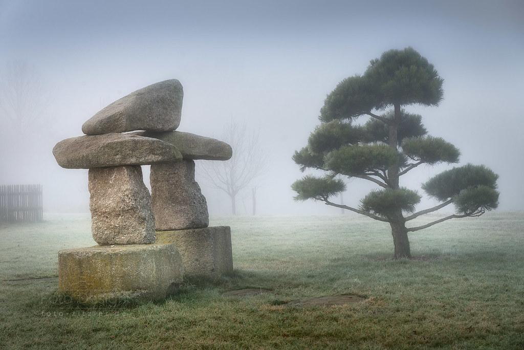 Rock 'n' Tree