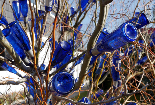 - blue bottle tree -