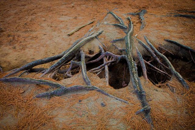 Root Sculptures (4 of 4).jpg