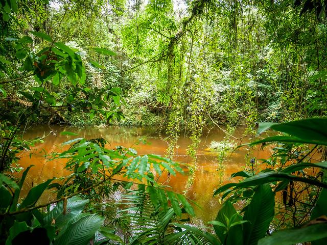 Rio Itatinga - Parque das Neblinas - Bertioga - Brasil