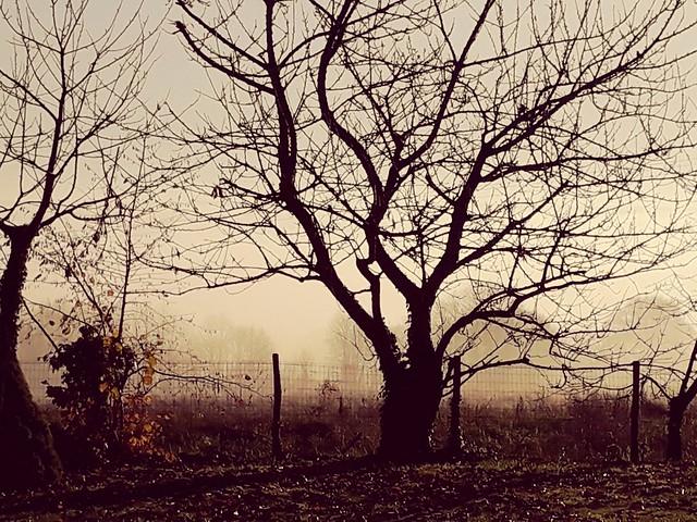 Brume matinale, décembre.