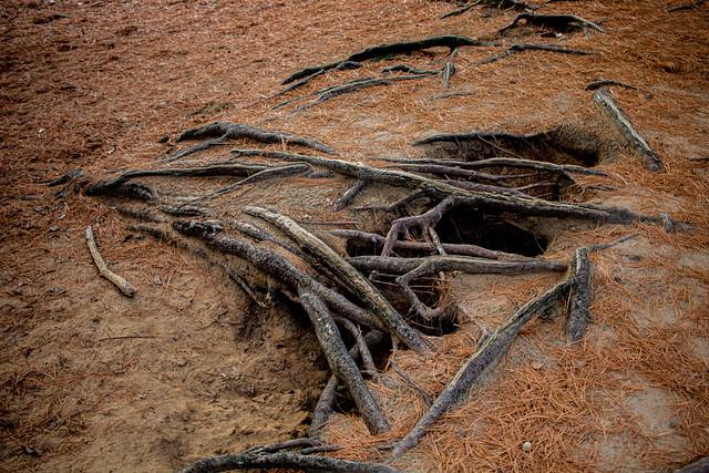 Root Sculptures (3 of 4).jpg