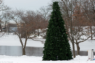 A Christmas tree in the middle of the park.