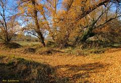 Desafío al otoño