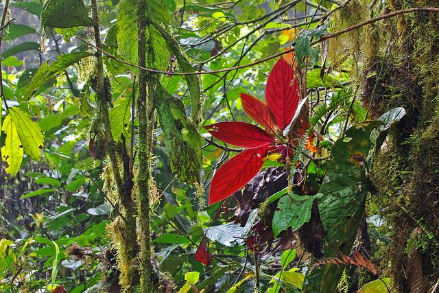 Jungle.  North-western Ecuador.