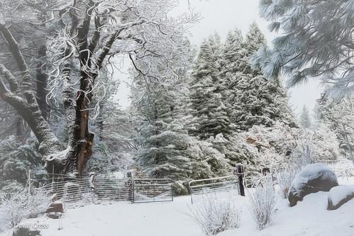 northerncalifornia california 50mm canon5dmarkiii landscape nevadacity sierranevadafoothills cementhilroad canon50mm18 lightroom6 vineyard topazstudio autumn fall nevadacounty snowyday