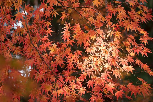 鍬山神社.