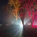 Enchanted Christmas-00242.jpg