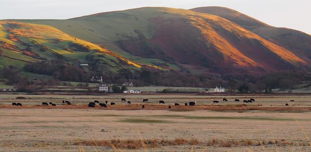 Across the frosty fields ... sunrise glow on the hills above Happy Valley (Cwm Maethlon), Tywyn.