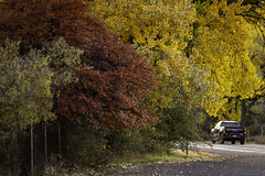 Driving Fall Colors In Fort Davis 2