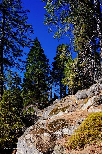 Au coeur de Sequoia Park