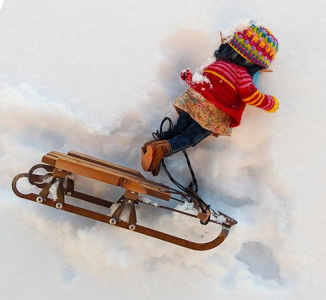 cricket sledding