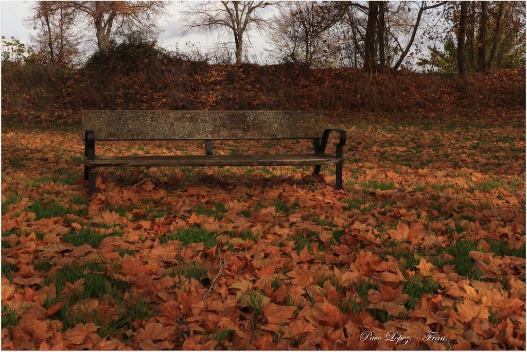 El Banco de otoño