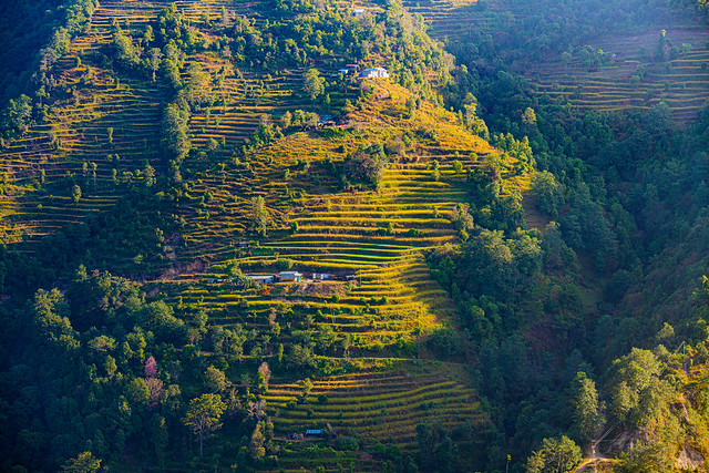 Terraced farming on the foothills of the Himalayas, Helambu region, Nepal
