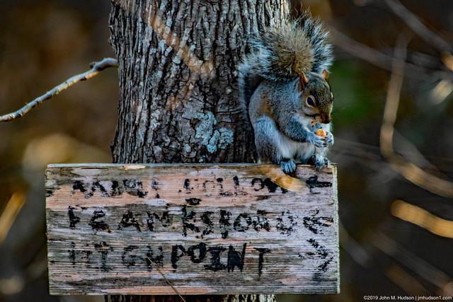 2019.12.07.8765 Squirrel