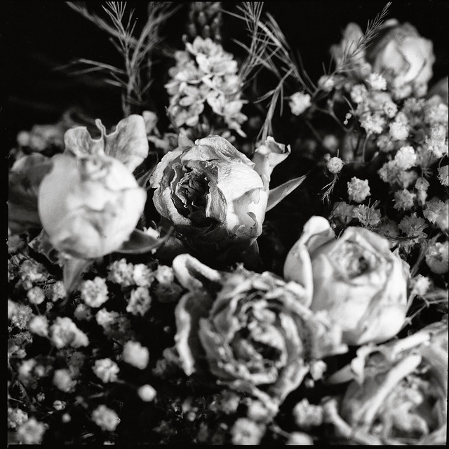 Roses in Melancholia (II)