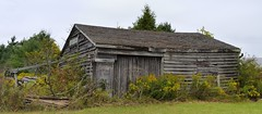 Old farm shack, Ayr, Township of North Dumfries, Ontario.