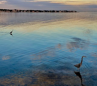 Birds on Tampa Bay