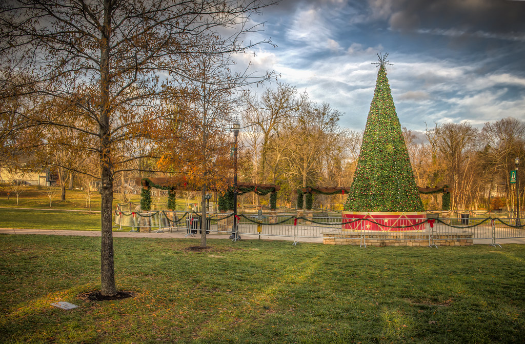 Christmas Tree in Dogwood Park