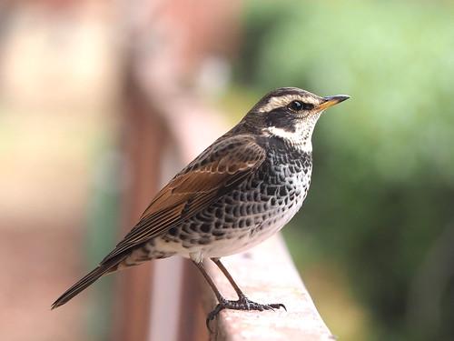 OMD EM1 12.8.2019 bird 2