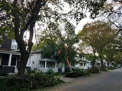 Downed Trees, Hurricane Dorian in Halifax, Nova Scotia, Canada.