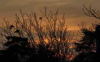 Sunset between branches