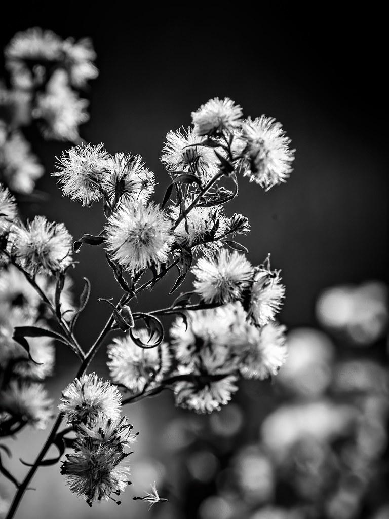 Fleurs d'hiver... 49185910778_20a1b14067_b
