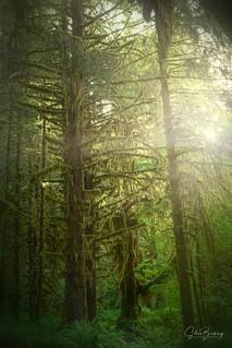 Radiant Rainforest