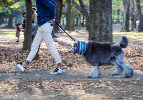 tokyo 代々木公園 yoyogipark sunset dog