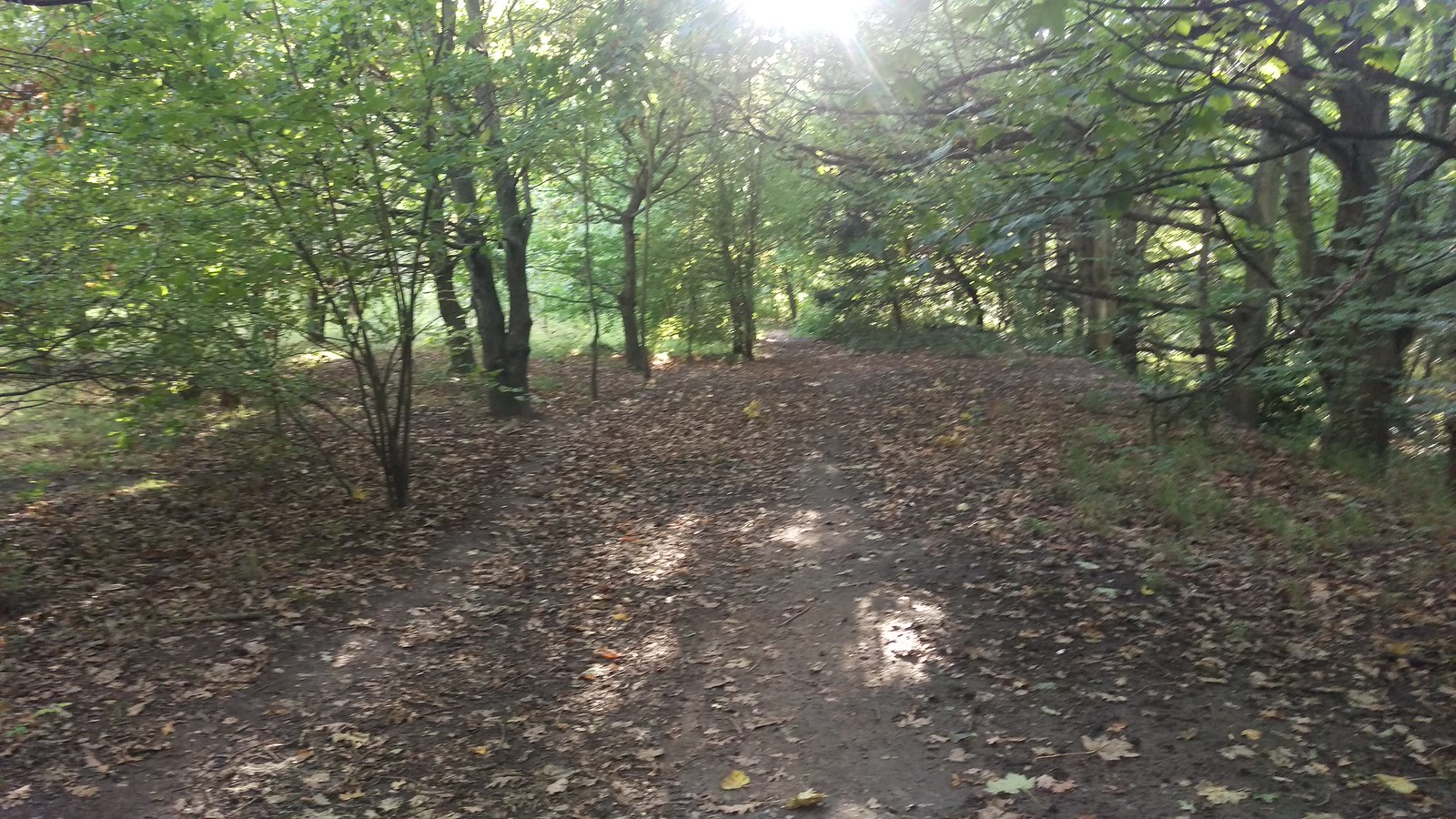 Woodland path in Nonsuch Park