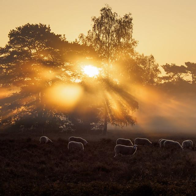 Sunbeams in the morning mist