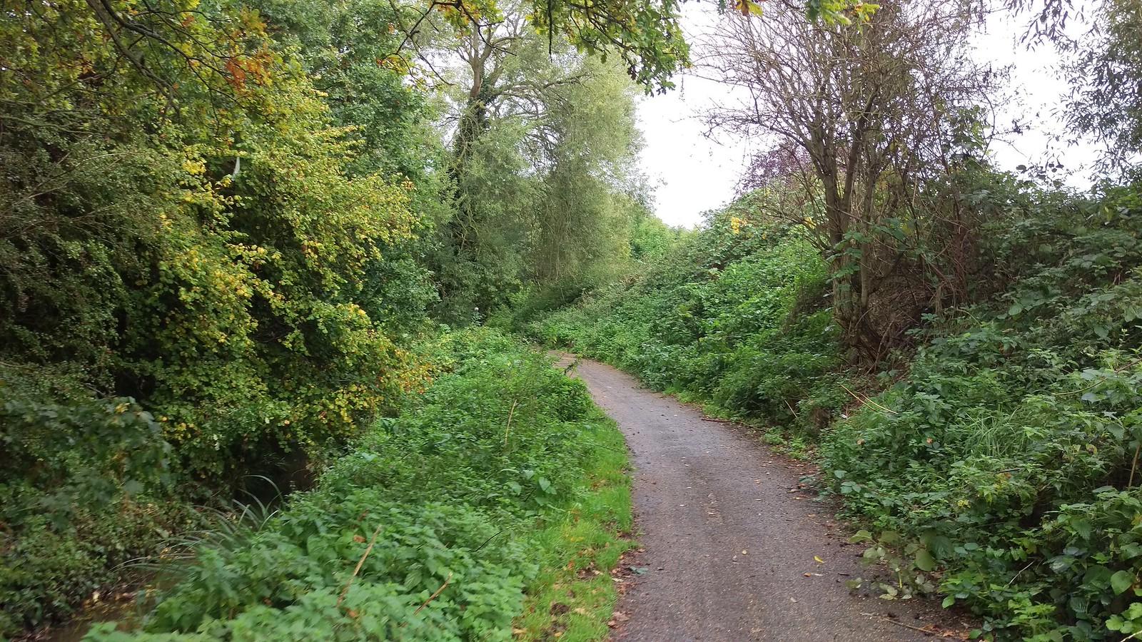 Hogsmill riverside path