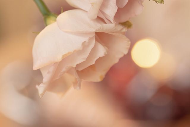 Rose, wie im Traum... (mein Stil 12)