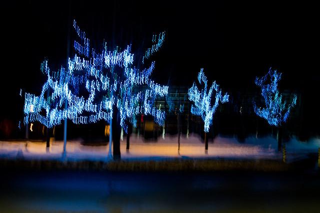 Photo de nuit, arbres illuminés à Rimouski.