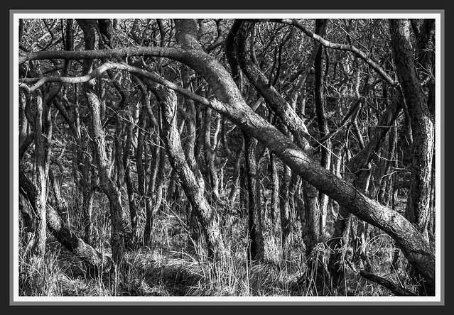 SJ2_0318 - Trees