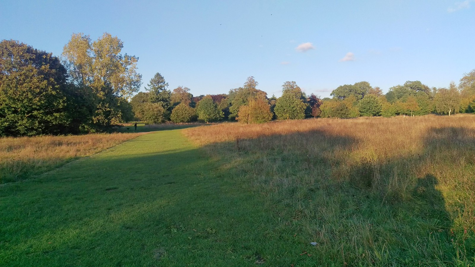 Nonsuch Park in evening sunlight