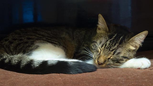 Clara, en su siesta.