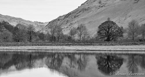 Tree reflections Ullswater -Lake District