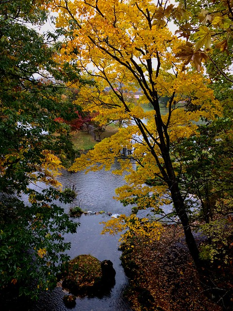 Fall colour, Hokkaido, Japan
