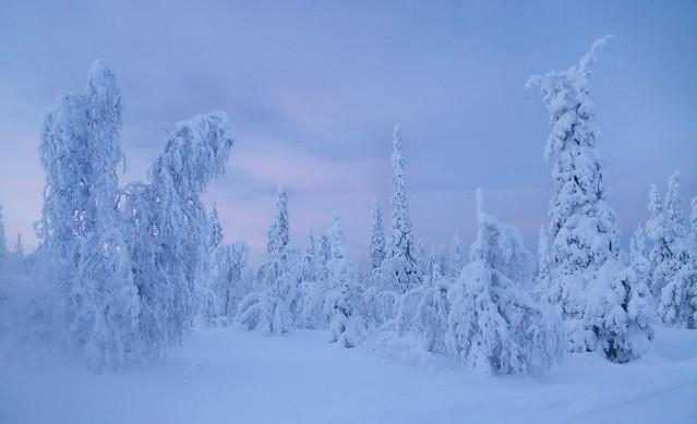 Frozen nature - Lapland - Finland