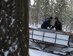Loading the snowmobile' trailer with the wood to be carried to the house