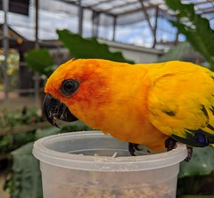 Parrot Ville, Belvedere, St Maarten, Nov 2019