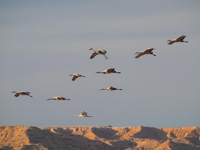 cranes over Ladd S Gordon waterfowl complex