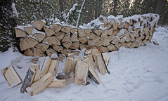 Chopping the aspen large wood stumps