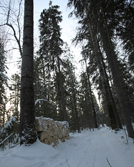 The wood pile in the forest nearby the house